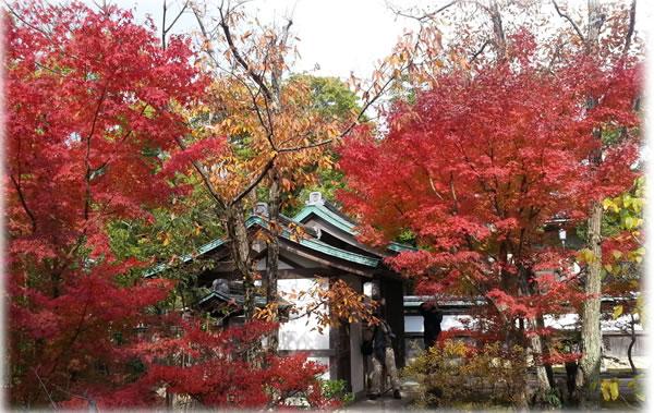 鎌倉 鶴岡八幡宮の紅葉